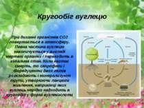 При диханні організмів СО2 повертається в атмосферу. Певна частина вуглецю на...