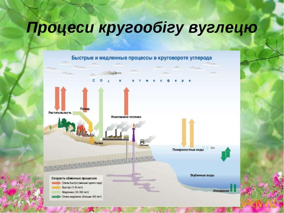 Процеси кругообігу вуглецю