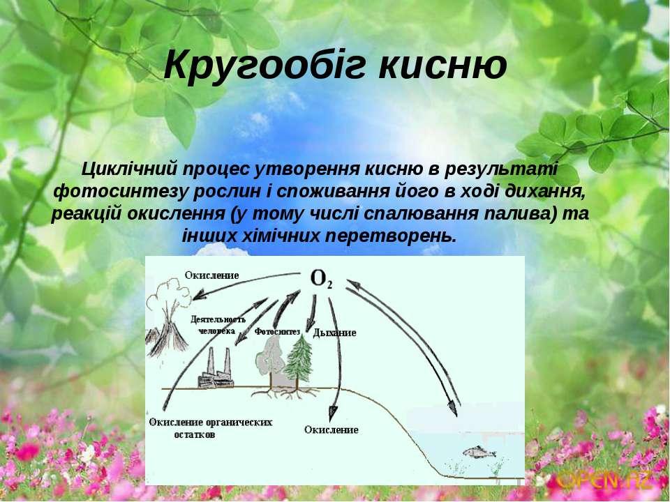 Кругообіг кисню Циклічний процес утворення кисню в результаті фотосинтезу рос...