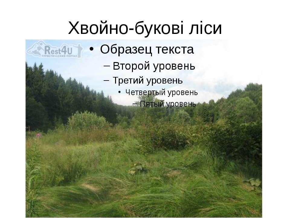Хвойно-букові ліси