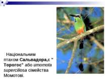 """Національним птахомСальвадора,є""""Торогос""""абоumomota superciliosaсімейства..."""