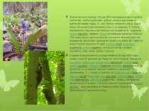 Значна частина території (більше 93%) заповідника вкрита дубово-грабовими, гр...