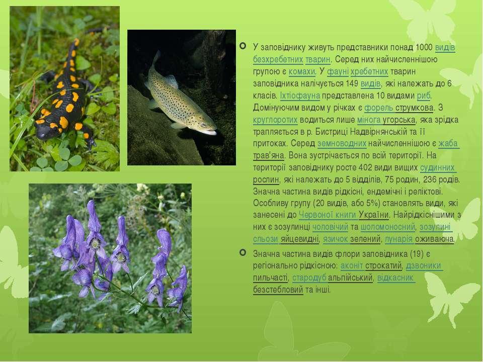 У заповіднику живуть представники понад 1000 видів безхребетних тварин. Серед...