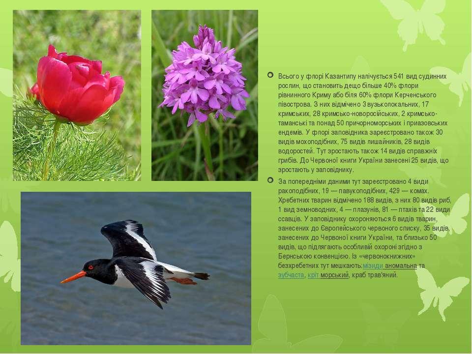Всього у флорі Казантипу налічується 541 вид судинних рослин, що становить де...