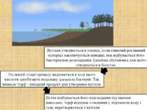 Вугілля утворюється в умовах, коли гниючий рослинний матеріал накопичується ш...