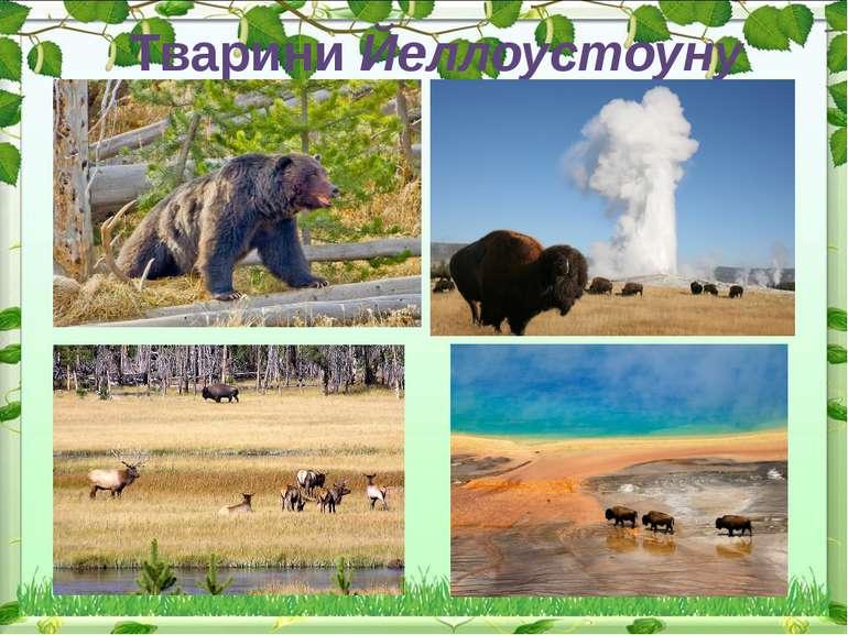 Тварини Йеллоустоуну