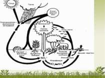 Кругообіг азоту в природі. (За В.П.Кучерявим)