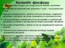 Колообіг фосфору У ґрунті фосфор входить до складу решток мертвих організмів....