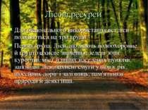 Лісові ресурси Для раціонального використання всі ліси поділяються на три гру...