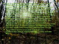 Одне із тривожних явищ останніх років - усихання лісів: новий вид руйнування....