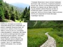 У Франції збереглися лише незначні залишки величних лісів, які колись покрива...