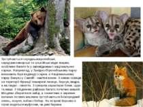 Зустрічаються середньоєвропейські, середземноморські та альпійські види твари...