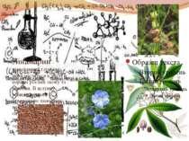 Лінамарин – ціаногенний глікозид, який міститься в листі й корінні рослин льо...