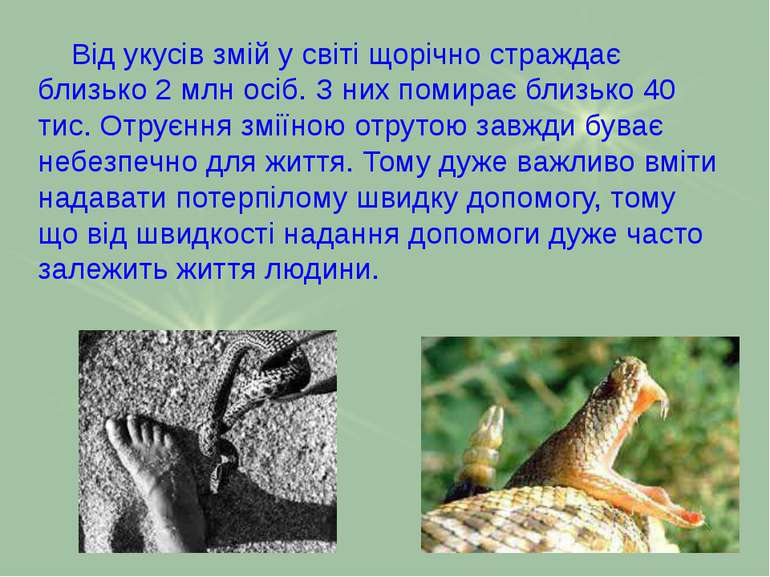 Від укусів змій у світі щорічно страждає близько 2 млн осіб. З них помирає бл...