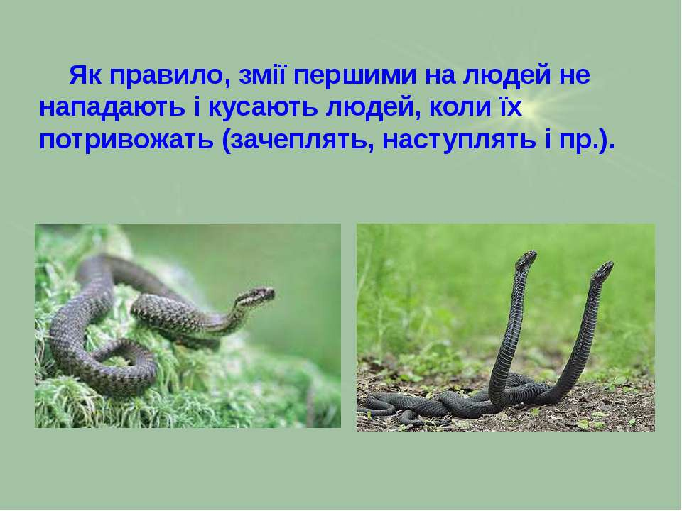 Як правило, змії першими на людей не нападають і кусають людей, коли їх потри...