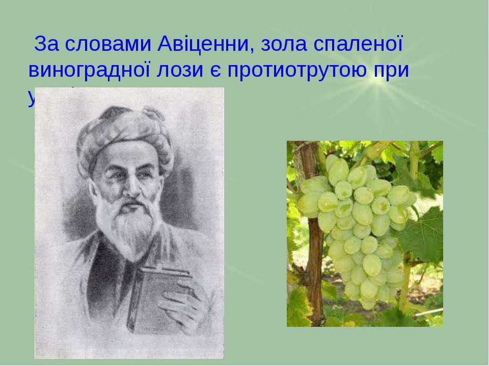 За словами Авіценни, зола спаленої виноградної лози є протиотрутою при укусі ...