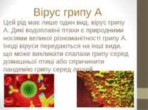 Вірус грипу A Цей рід має лише один вид, вірус грипу A. Дикі водоплавні птахи...