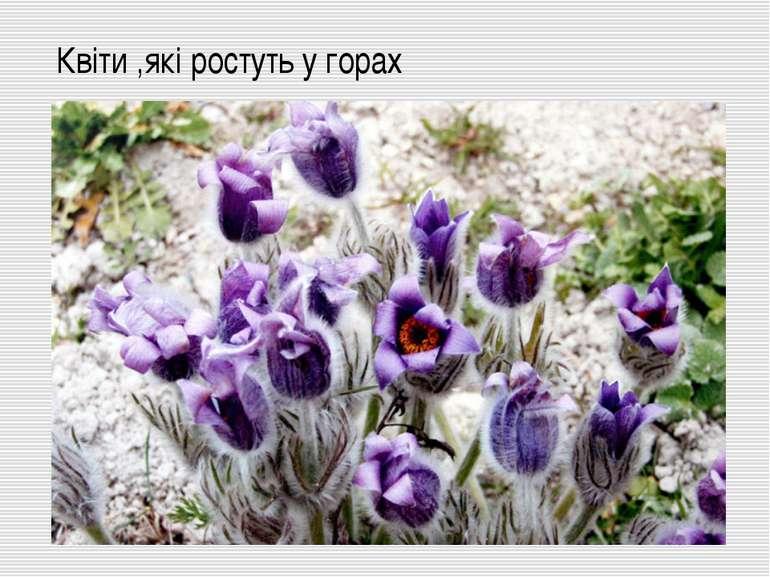 Квіти ,які ростуть у горах
