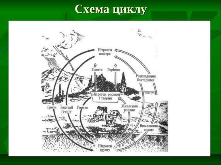 Схема циклу
