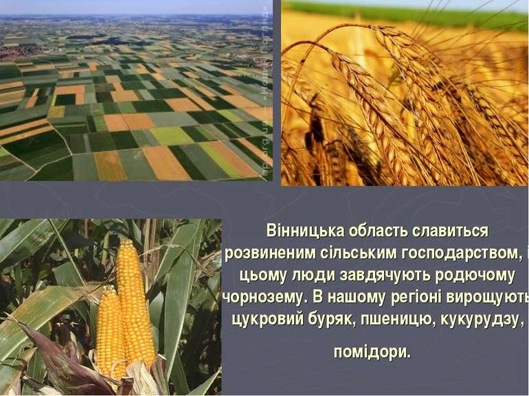 Вінницька область славиться розвиненим сільським господарством, і цьому люди ...