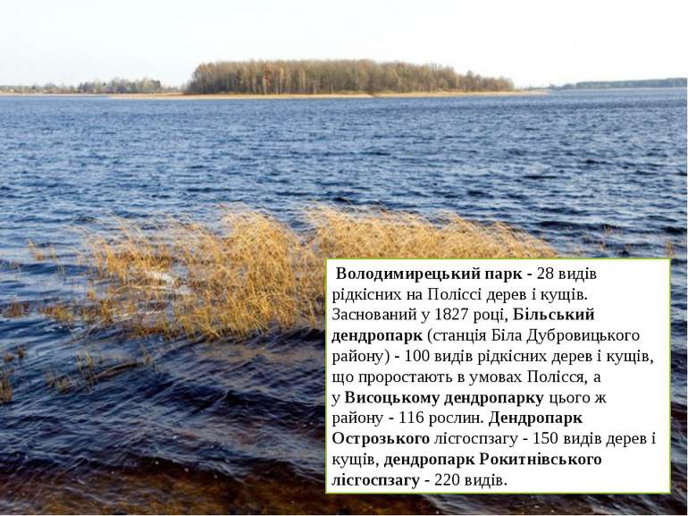 Володимирецький парк- 28 видів рідкісних на Поліссі дерев і кущів. Заснован...