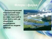 У лісах (переважно хвойних) і на гірських луках Йеллоустоуна можна зустріти м...