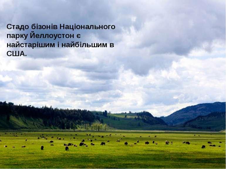 Тваринний світ Йеллоустоунсього національного парку вважається найбагатшим на...