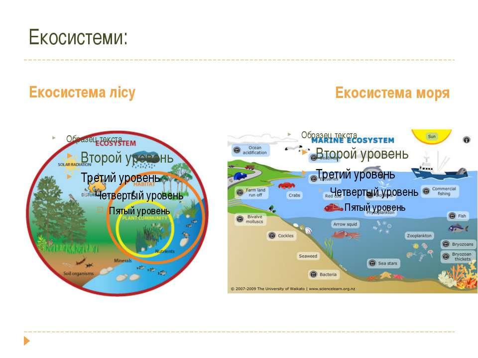 Екосистеми: Екосистема лісу Екосистема моря