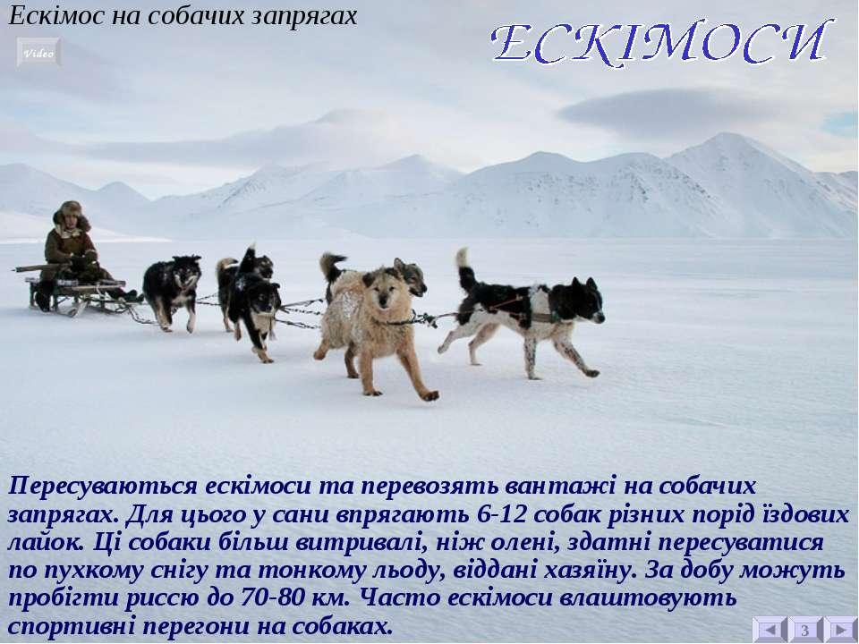 Ескімос на собачих запрягах Пересуваються ескімоси та перевозять вантажі на с...