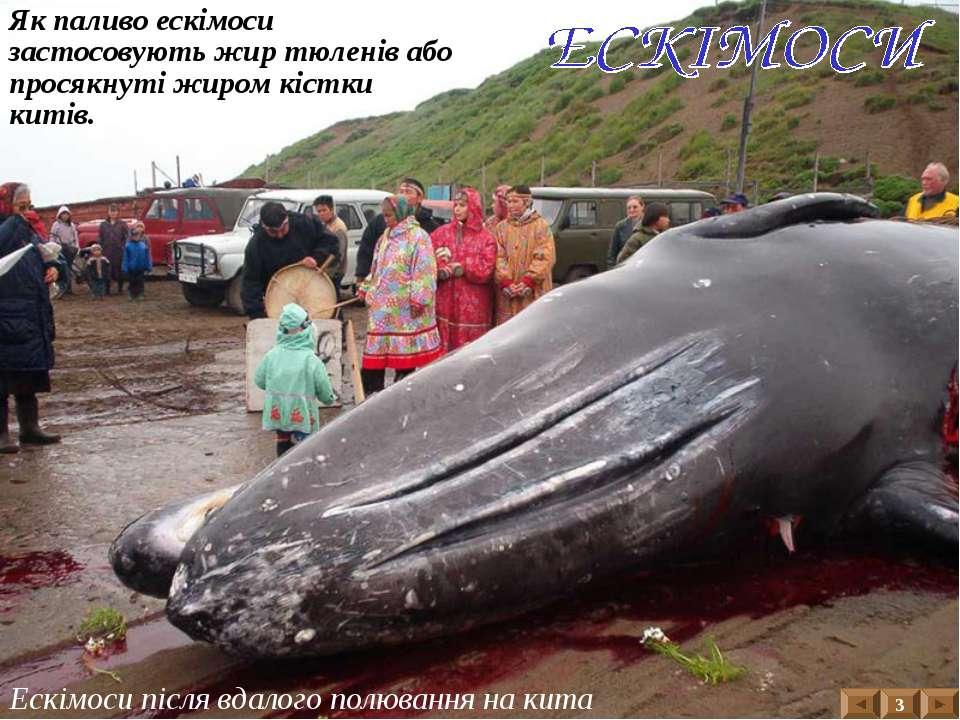 Ескімоси після вдалого полювання на кита 3 Як паливо ескімоси застосовують жи...