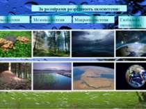 Мікроекосистеми За розмірами розрізняють екосистеми: Макроекосистеми Мезоекос...