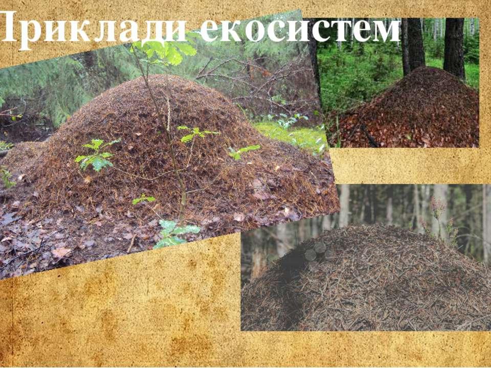 Приклади екосистем