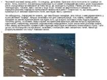 Черговий масовий викид риби. Оселедець, дельфіни. Причини ніхто пояснити як і...