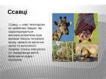 Ссавці Ссавці—кластеплокровниххребетнихтварин, які характеризуються висо...