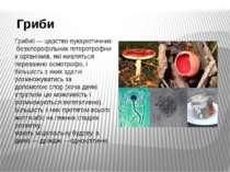Гриби Гриби —царствоеукаріотичнихбезхлорофільнихгетеротрофних організмів...