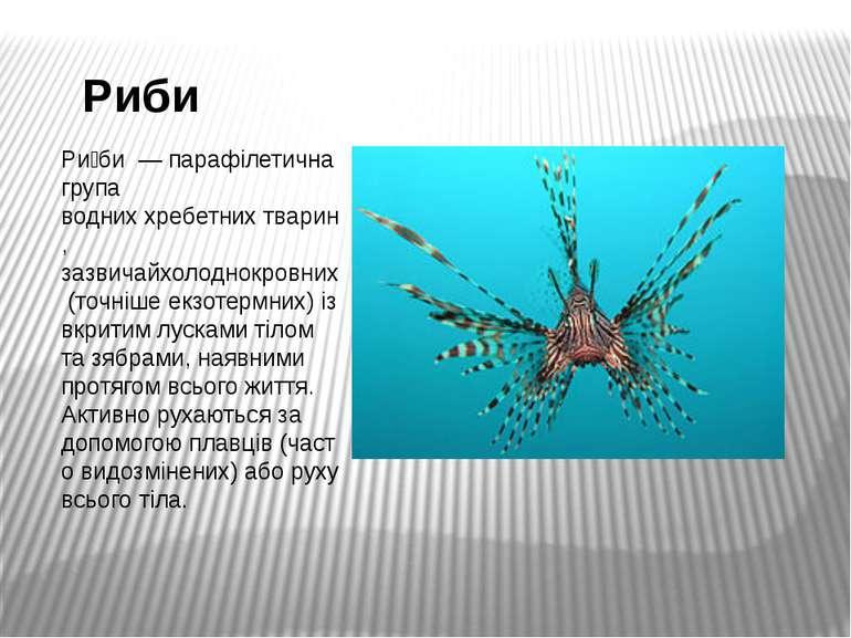 Риби Ри би—парафілетичнагрупа водниххребетнихтварин, зазвичайхолоднокро...