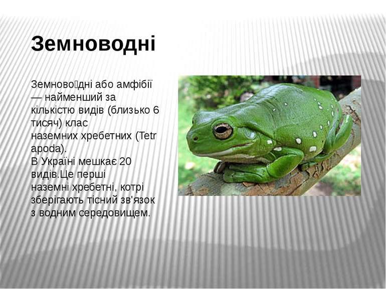 Земноводні Земново дніабоамфібії— найменший за кількістю видів (близько 6...