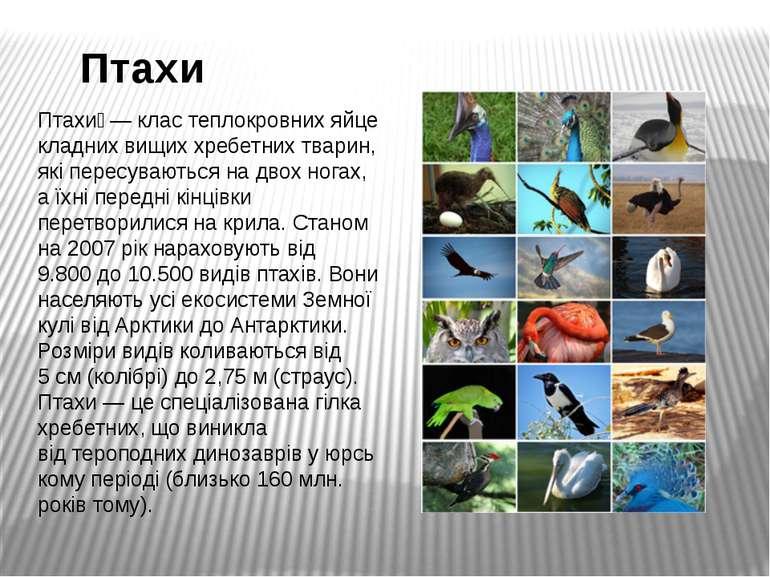 Птахи Птахи —кластеплокровнихяйцекладнихвищиххребетнихтварин, які пере...