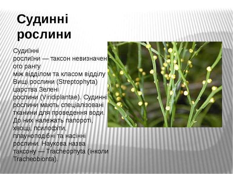 Судинні рослини Суди нні росли ни—таксонневизначеного рангу міжвідділомт...
