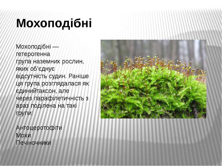 Мохоподібні Мохоподібні— гетерогенна групаназемних рослин, яких об'єднує ві...