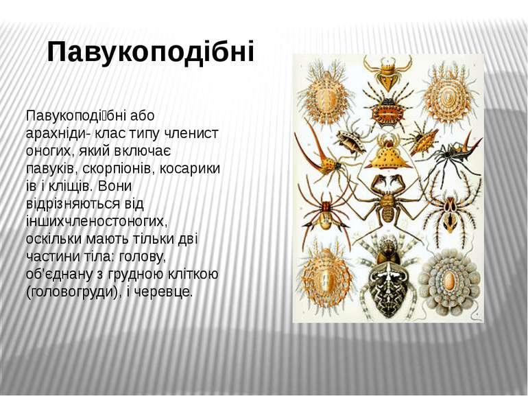Павукоподібні Павукоподі бніабо арахніди-кластипучленистоногих, який вклю...