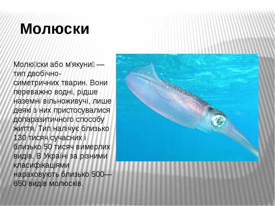 Молюски Молю скиабом'якуни — типдвобічно-симетричнихтварин. Вони переваж...
