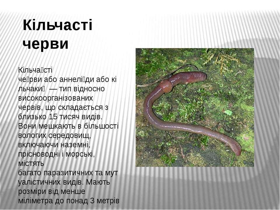Кільчасті черви Кільча сті че рвиабоаннелі диабокільчаки — тип відносно...