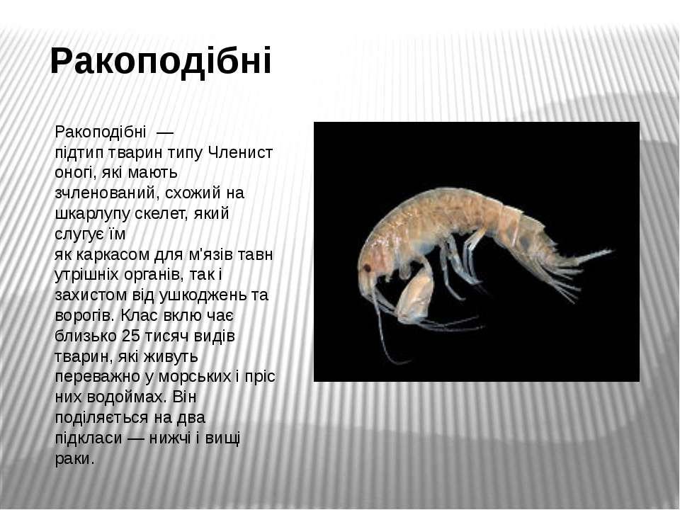 Ракоподібні Ракоподібні— підтиптваринтипуЧленистоногі, які мають зчленов...