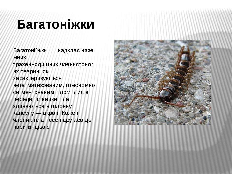 Багатоніжки Багатоні жки—надкласназемних трахейнодишнихчленистоногих тва...