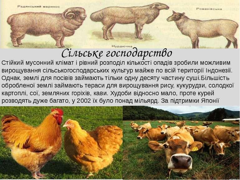 Сільське господарство Стійкий мусонний клімат і рівний розподіл кількості опа...