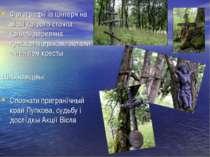Фотоґрафії із цінтеря на місці котрого стояла колись деревяна ґрек.кат. церьк...
