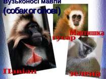 Вузьконосі мавпи (собакоголові)