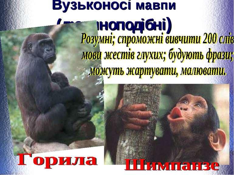 Вузьконосі мавпи (людиноподібні)