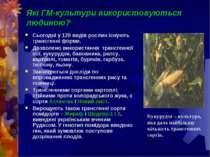 Які ГМ-культури використовуються людиною? Сьогодні у 120 видів рослин існують...